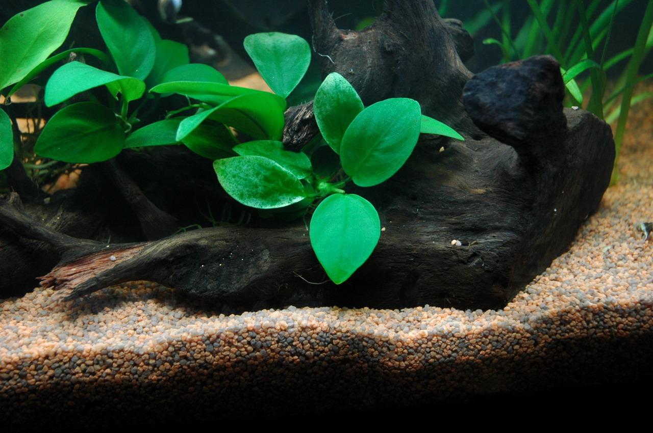Aquarium Aquarium landscape
